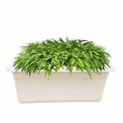 Fox B 9 Inch Rectangular White German Polymer Planter, TP-24X10X10